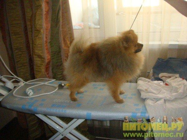 Всем заводчикам собак, любителям выставок,любителям собак и прочих песоманов :D 636197
