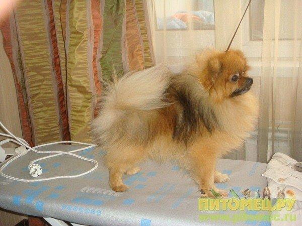 Всем заводчикам собак, любителям выставок,любителям собак и прочих песоманов :D 636200