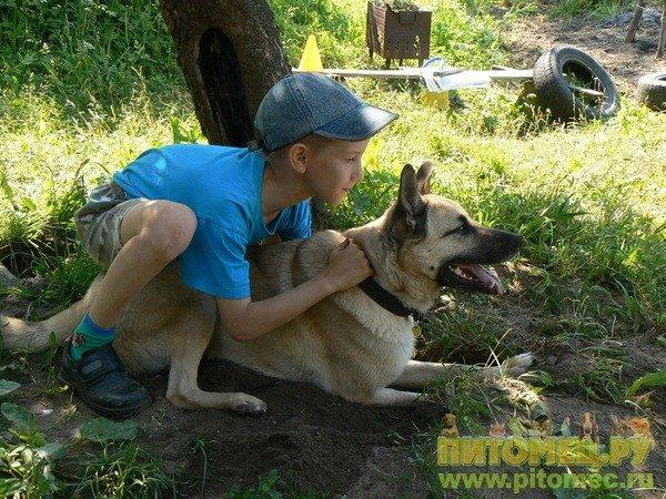 http://pitomec.ru/i/V_Rednaya/5425/54145.jpg