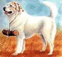породы собак - Страница 3 Ruminskaya