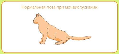 Урологический синдром у котов это