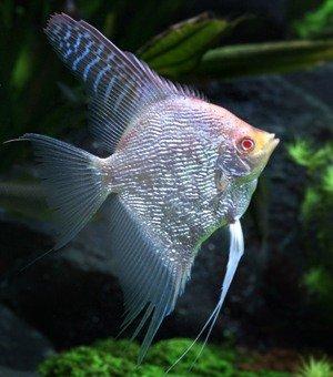фото рыб 15 ru