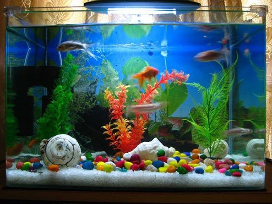 Интерьер в аквариум своими руками