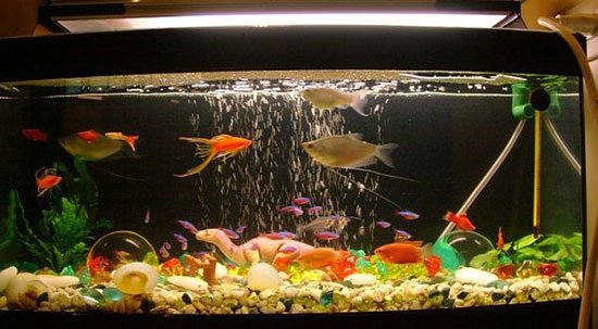 Оформление аквариума своими руками фото 6