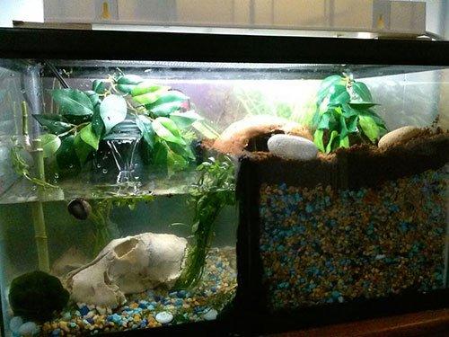 Красноухие черепахи в домашних условиях 852
