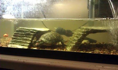 Красноухая черепаха домик своими руками 36