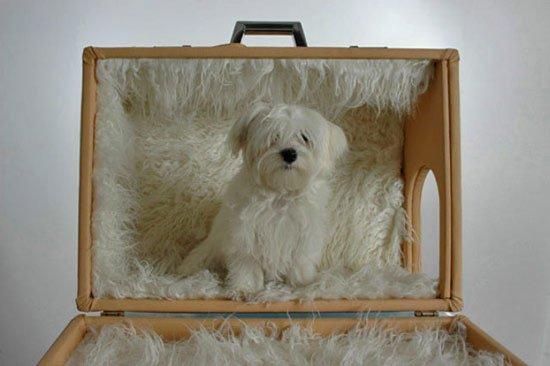 домик для собаки своими руками фото 2