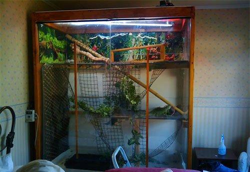 Игуана содержание в домашних условиях
