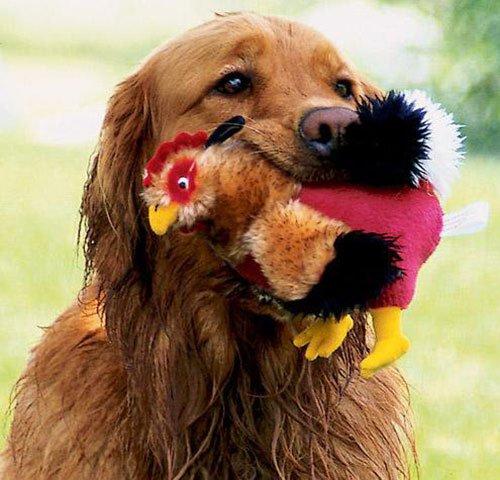 Какую игрушку можно сделать для собаки