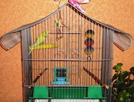 Игрушки попугаю картинки