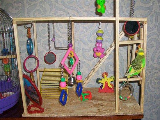 Игрушки для попугаев: купить или сделать своими руками? - Уход и содержание