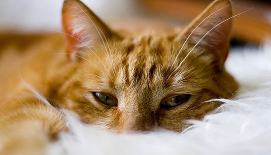 natty cat litter brisbane