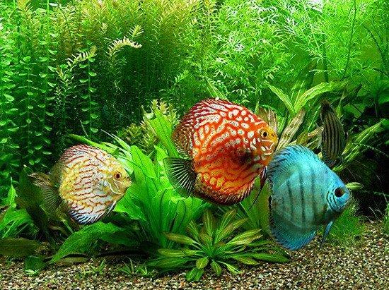 Подогрев аквариума