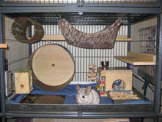 Как сделать домик для крысы в 89