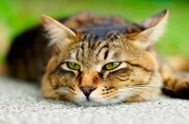 Кот ни ест и не пьёт что делать