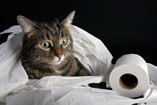 что делать от глистов в домашних условиях