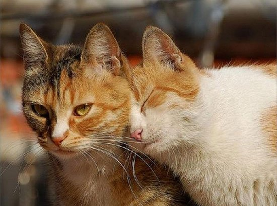 http://www.pitomec.ru/upload/admin/images/article/2015/cats-love-01.jpg