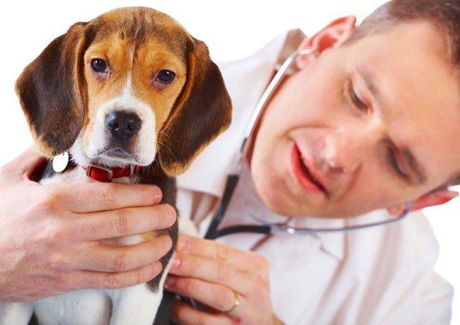 Понос (диарея) у собак: что делать, причины и лечение. - Болезни собак