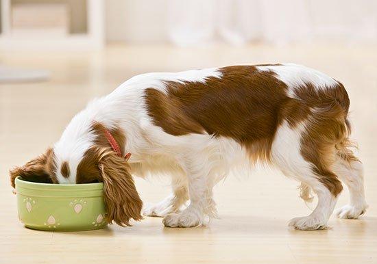 Картинки по запросу Чем лучше кормить собак,готовыми кормами или натуральными кашами?