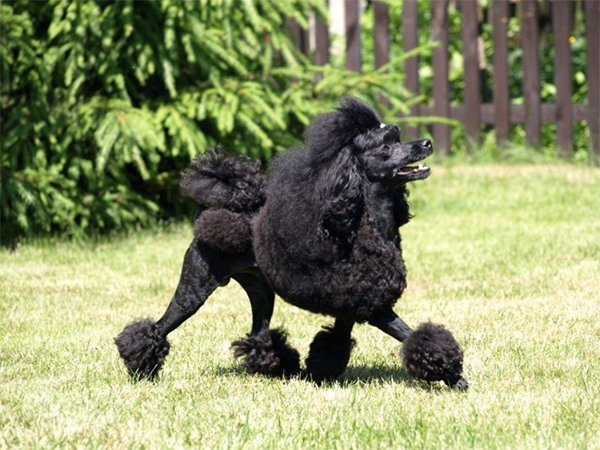 Картинки собак хаски щенки