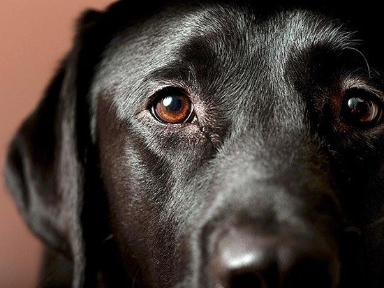 Эпилепсия у собак ПЕРВАЯ ПОМОЩЬ ЖИВОТНЫМ VK