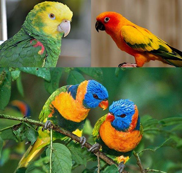 Купить попугая ара - 070d