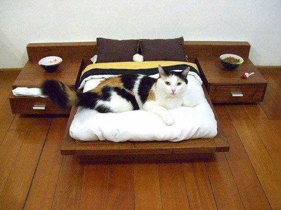 Лежаки для кота своими руками