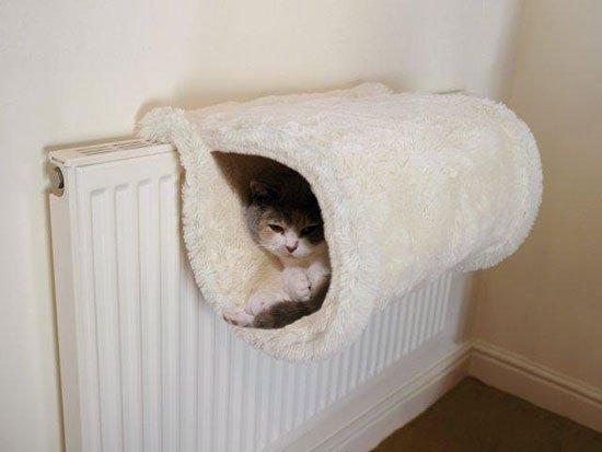 Как сделать своими руками для кошки кровать
