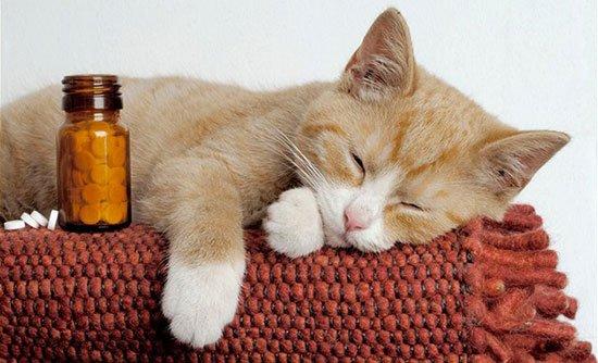 Кашель у кошек – это симптом! Кошки - 7я ру