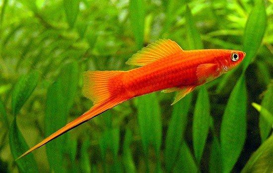 аквариум рыбки фото