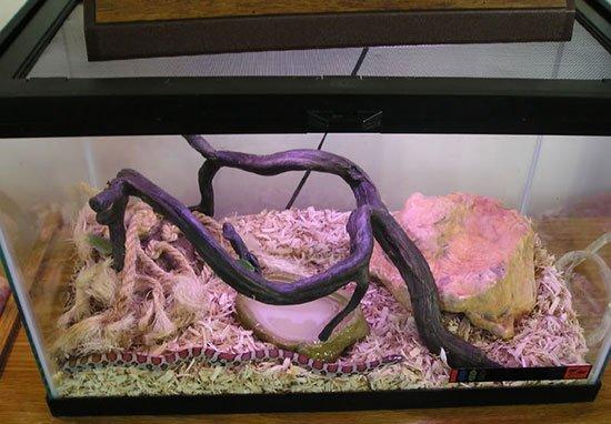 Условия содержания змеи в домашних условиях 589