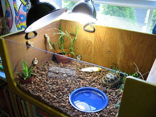 Сухопутные черепахи домик