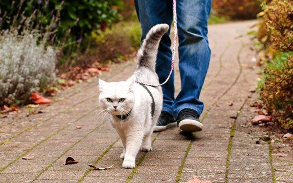 Нужно ли гулять на улице коту