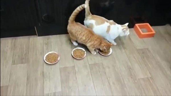 Самый жадный кот на свете фото 6