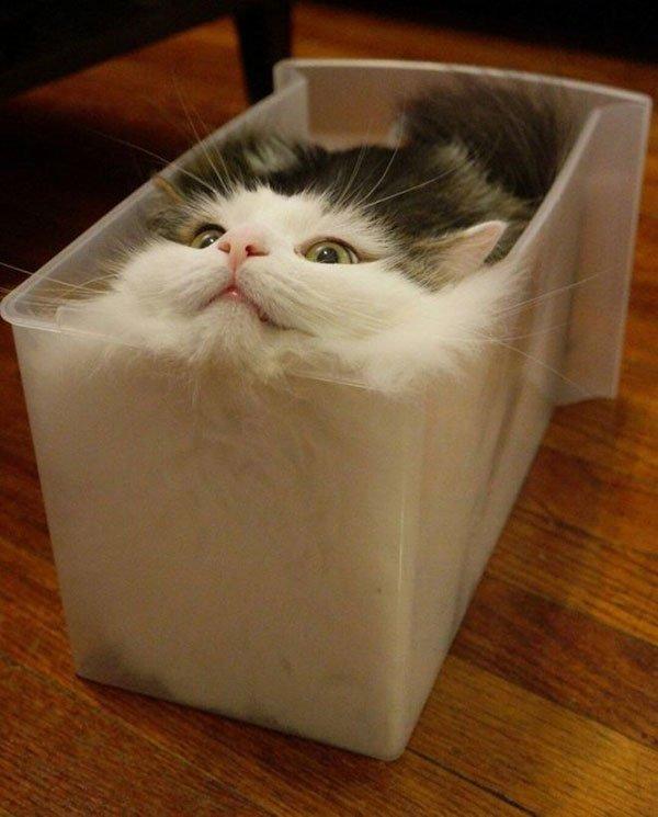 Фото смешных котов 14