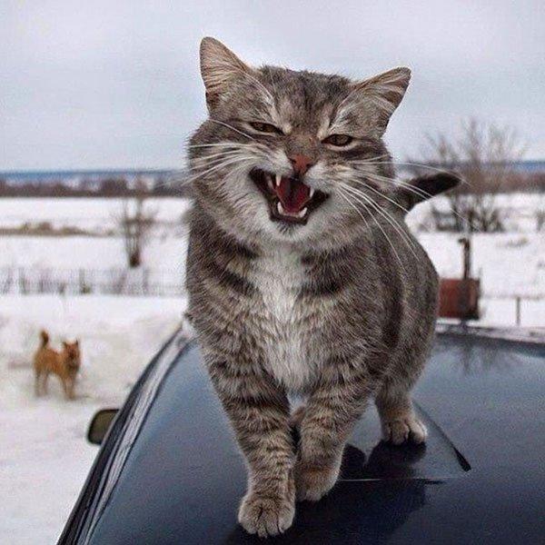 Фото смешных котов 2