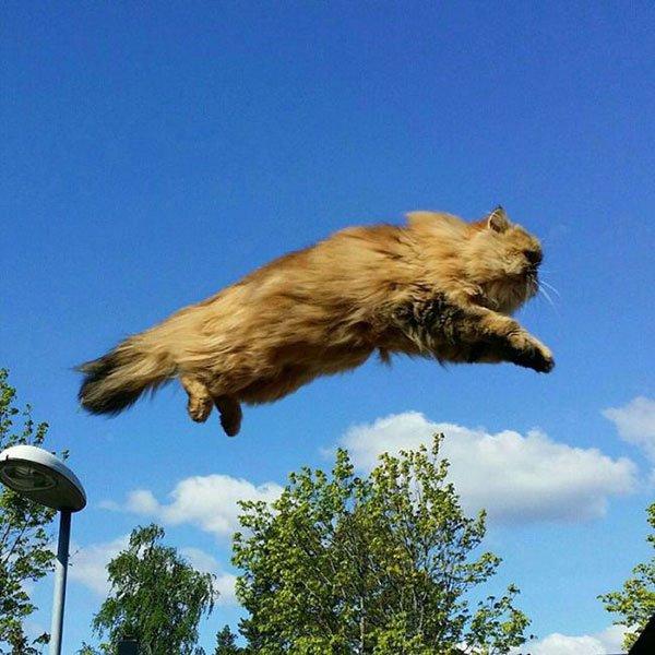 Фото смешных котов 6