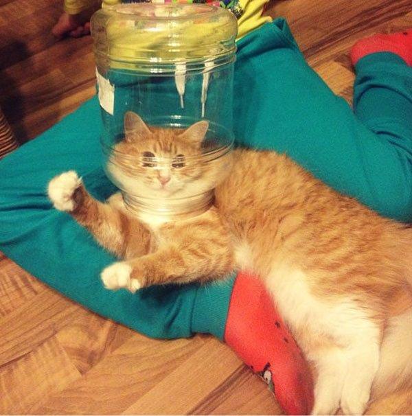Фото смешных котов 7