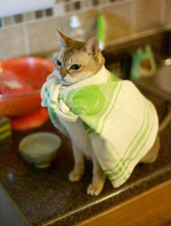 Фото смешных котов 8