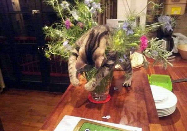 Фото смешных котов 9