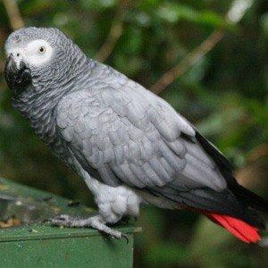 попугай жако г краснодар