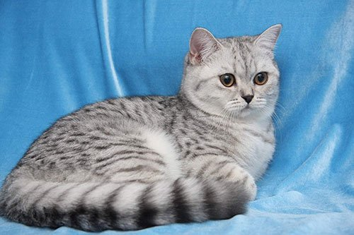 Кошки  zoovetru