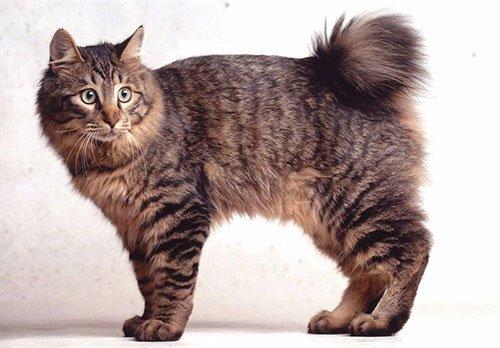 Самая популярная порода кошек №2