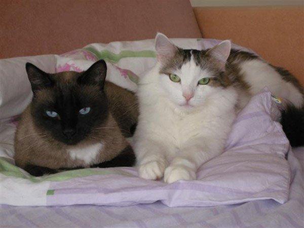 Кот или кошка что выбрать в квартиру