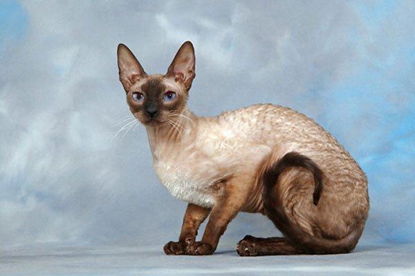 препараты для кошек от паразитов