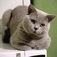 Кошка-домашнее животное, создающее уют в доме
