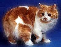 Кимрик - енциклопедія тварин