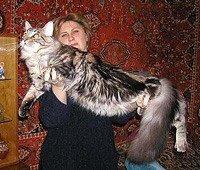 Мейн кун - самая крупная порода домашних кошек в мире.  Блаженны юзеры, ибо не ведают, что творят.