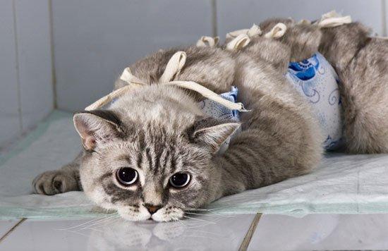 Обезболивающее для кота после операции