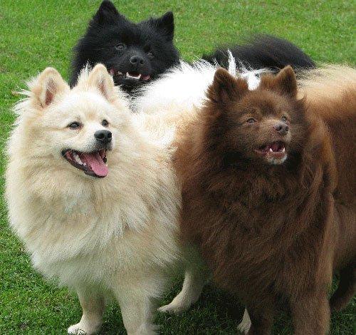 Продажа щенков и собак,